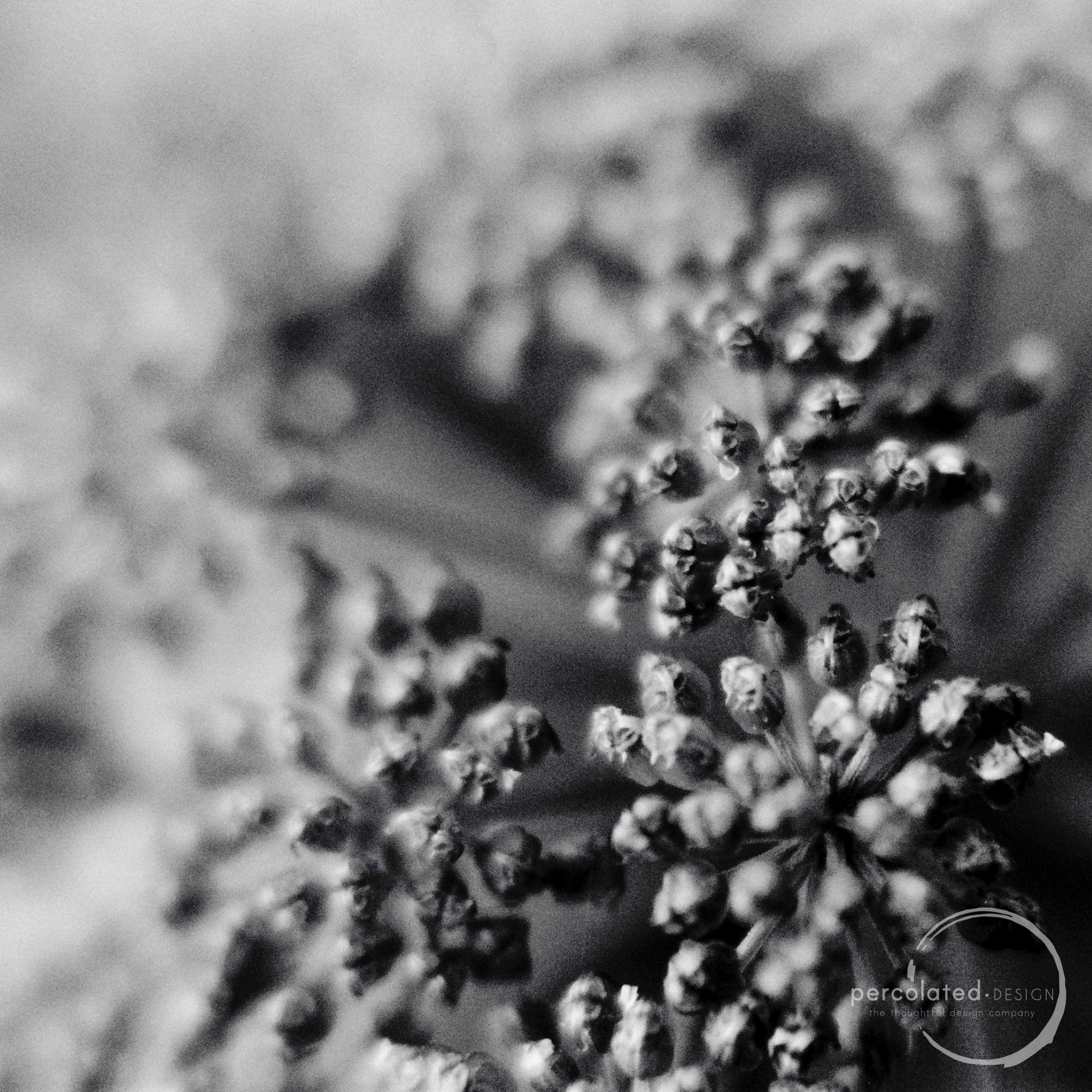 Macro seed heads